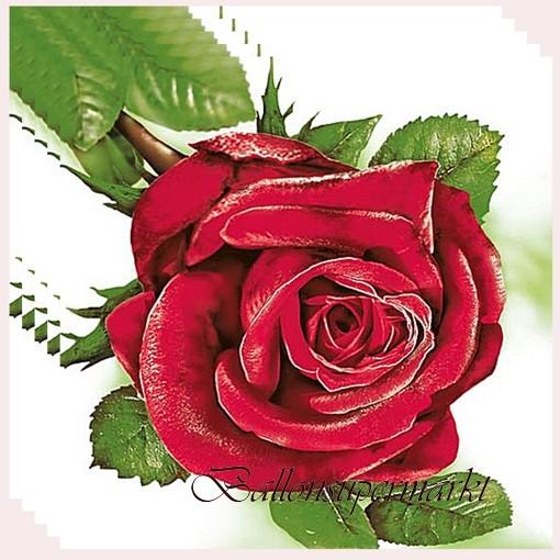 Servietten Mit Roter Rose Tischdekoration Ballonsupermarkt
