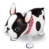 Bulldogge Airwalker Luftballon