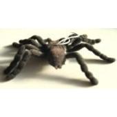 Haarige Spinne, Scherzspinne, schwarz