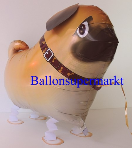 Lustiger-Mops-Luftballon-mit-Helium